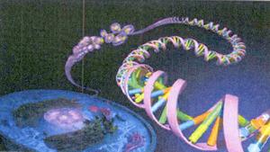 コラーゲン遺伝子.jpg